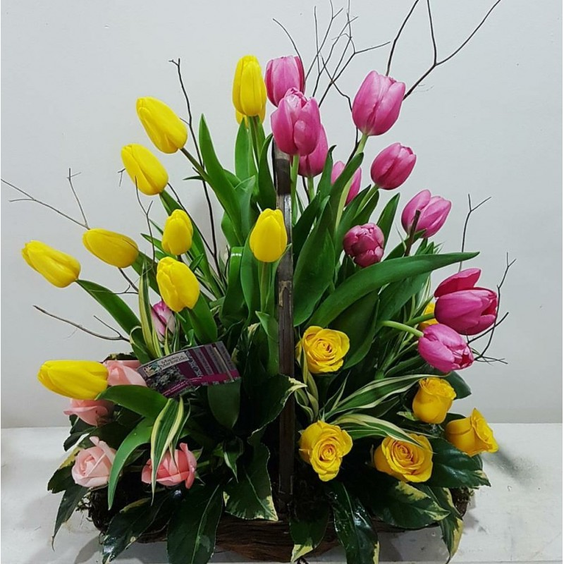 Tulips Romance
